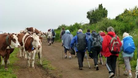 La vache, il pleut ! Le retour sous la pluie...